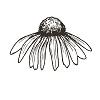 Echinacea $1000+